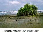 View Of Beautiful Bush Grass O...