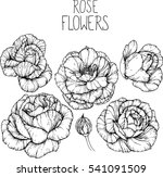 rose flowers drawing vector... | Shutterstock .eps vector #541091509