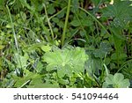 grass decorated dew | Shutterstock . vector #541094464