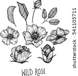 wild rose flowers drawing... | Shutterstock .eps vector #541105711