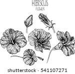 hibiscus flowers drawing vector ... | Shutterstock .eps vector #541107271