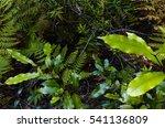 Lush  Green Vegetation In The...
