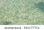 Fish In The Clear Azure Water...