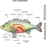 anatomy of fish | Shutterstock .eps vector #541242241