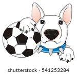 Face Of White Bull Terrier Wit...