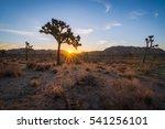 Joshua Tree National Park...