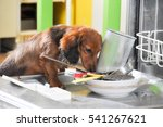Dog And Dishwasher