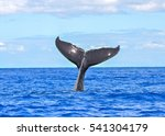 humpback whale diving  tail out ... | Shutterstock . vector #541304179