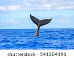 humpback whale diving  tail out ...   Shutterstock . vector #541304191