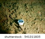 Small photo of close up colourful Metridium with scuba diving