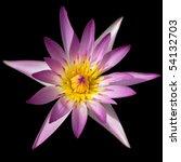 Pink Lotus Isolated On Black...