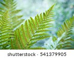 beautiful fern leaves with... | Shutterstock . vector #541379905