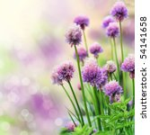 Chive Herb Flowers On Beautiful ...