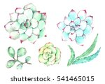 watercolor cactuses flowers and ... | Shutterstock . vector #541465015