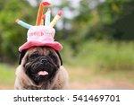 Pug Dog Wearing Pink Happy...