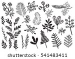 hand drawn vintage floral... | Shutterstock . vector #541483411