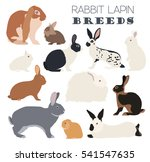 rabbit  lapin breed icon set.... | Shutterstock .eps vector #541547635