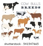 cattle breeding farming. cow ... | Shutterstock .eps vector #541547665