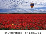 picturesque field of colorful... | Shutterstock . vector #541551781