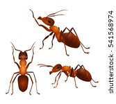 brown ants isolated on white.... | Shutterstock .eps vector #541568974