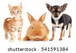 Stock photo cute friendly pets on white background 541591384