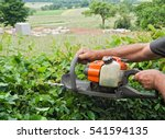 man cutting a hedge with a... | Shutterstock . vector #541594135