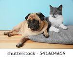 Stock photo adorable pug and cute cat lying together on pillow 541604659