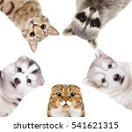 portrait of a group of pets... | Shutterstock . vector #541621315