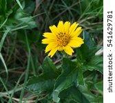 yellow flower | Shutterstock . vector #541629781