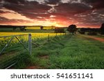 sunrise on the farm in country... | Shutterstock . vector #541651141