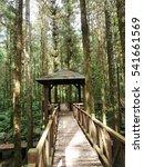 mingchi national forest... | Shutterstock . vector #541661569