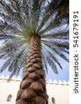 palm tree in soft light of... | Shutterstock . vector #541679191