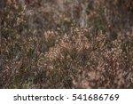 heather   Shutterstock . vector #541686769