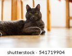 a beautiful portrait of a cute... | Shutterstock . vector #541719904