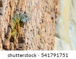 Lizard At A Wall