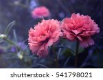 closeup  beautiful flowers ... | Shutterstock . vector #541798021