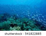school of sardines swarm over... | Shutterstock . vector #541822885
