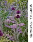 Small photo of Detail of a flower border with Achillea, Allium and Grasses