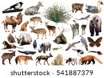 set of various asian isolated... | Shutterstock . vector #541887379