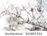dry grass herbs under the snow. ... | Shutterstock . vector #541891531