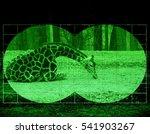 Hunt on Giraffe - view through night vision - stock photo