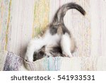 Stock photo cute kitten playing with the mat close up 541933531
