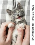Stock photo man is playing with a lovely a kitten holding him by the paws close up 541937821