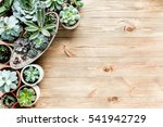floral frame with succulents... | Shutterstock . vector #541942729