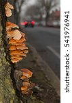 Roadside Tree Fungus