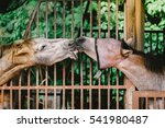 two horse kissing together.... | Shutterstock . vector #541980487