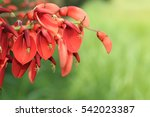 Closeup Picture Of Coral Tree