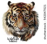 tiger watercolor painting | Shutterstock . vector #542047021