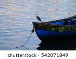Cormorant On The Small Boat...