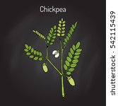 chickpea  cicer arietinum   or... | Shutterstock .eps vector #542115439